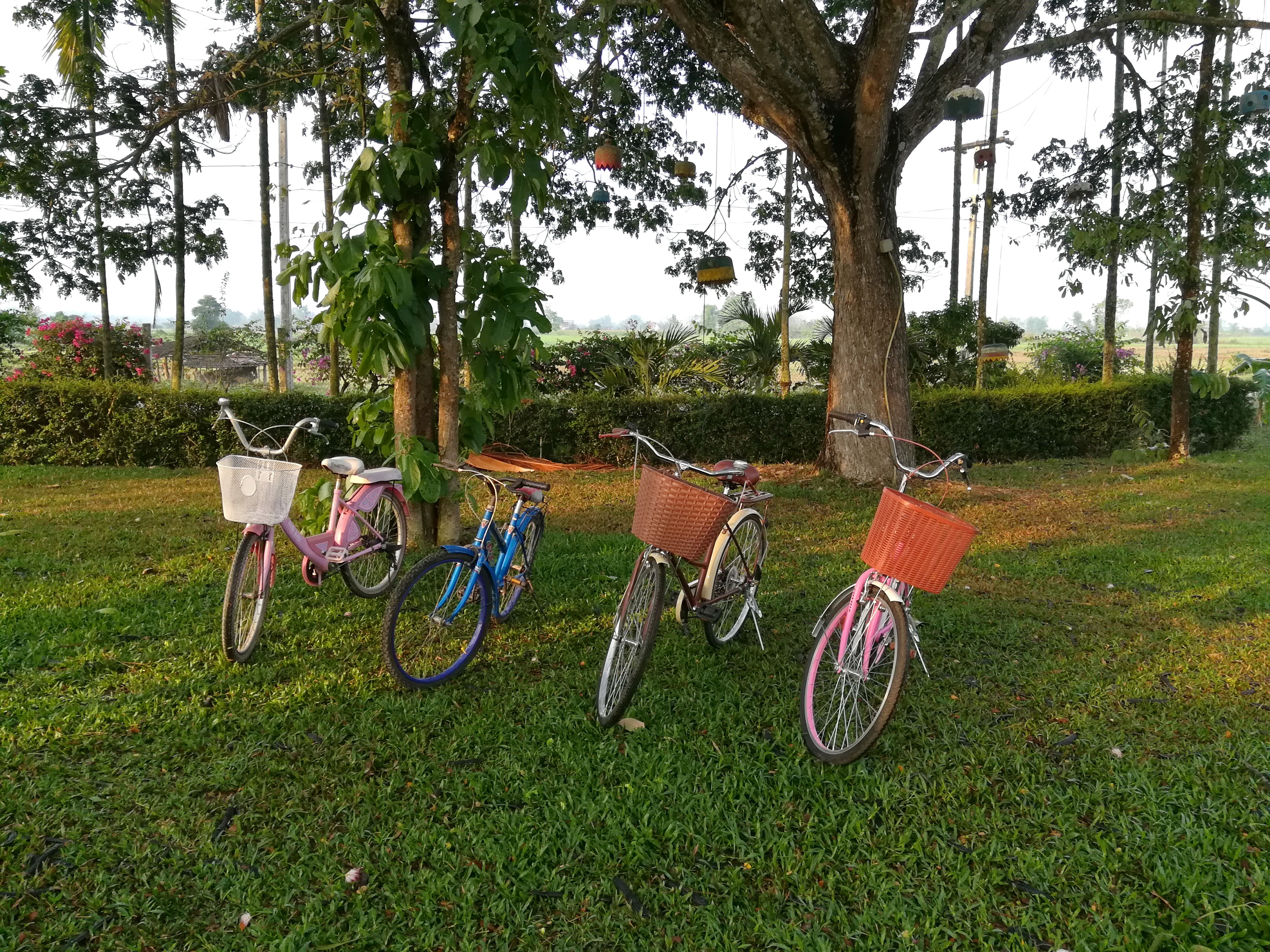 Street Bicycle and Children Bicycle Rent a Bicycle